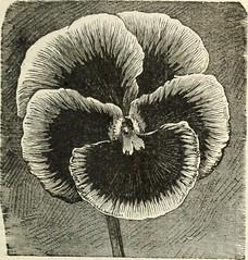Anglų lietuvių žodynas. Žodis cole-seed reiškia cole-sėkla lietuviškai.