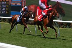 homestretch (ranchodon) Tags: california horse racetrack canon delmar racehorse