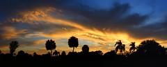 Monday's Sunset Panorama (Jim Mullhaupt) Tags: pink blue trees sunset red wallpaper sky panorama orange sun color weather silhouette yellow night palms landscape evening nikon flickr florida dusk coolpix bradenton p510 mullhaupt cloudsstormssunsetssunrises jimmullhaupt