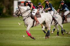 """2014 """"Ham Polo Club"""" (Ham Polo Club) Tags: england london sport equestrian 2014 gbr clubmatch hampolo tw107ah polopirates greenfordefarm"""