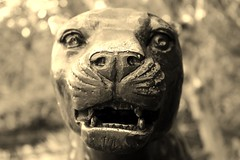 Panther (Kreuk1) Tags: face animal animals sepia zoo wildlife panther colchester