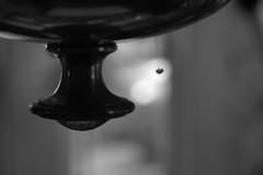 life 2 (Summ....) Tags: life bw 2014 rightnow spidereggs g16 liveandletlive