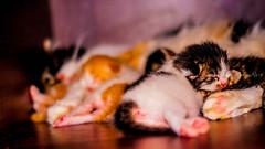 The family (@RmnaRz) Tags: cats pets animals kittens kitties
