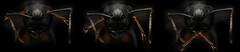 See no Evil, Hear no Evil, Speak no Evil (Macroscopic Solutions) Tags: new black macro photoshop fun photography see funny no joke ant evil micro ants mm macropod biology microscope speak hear entomology viral macrophotography photomicrography macroscopic phasmida photomacrography photostacking zerene gimic entomologists zerenestacker entomolog macroscopicsolutions zerenestackerzerene