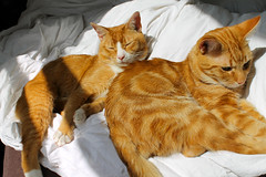 "Sleepy Heads • <a style=""font-size:0.8em;"" href=""http://www.flickr.com/photos/89972965@N03/14963472340/"" target=""_blank"">View on Flickr</a>"