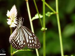 AIMG_0642 (Apurva Oka) Tags: mountain flower tree green nature forest dew monsoon greenery
