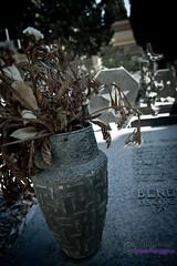 San Michele Cemetery (Sara Petagna | apesara) Tags: cemetery statue rip graves cagliari tombe cimitero morti