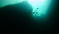 Underwater Inland Sea, Dwejra, Gozo (yayapapaya77) Tags: fish rocks underwater diving malta fisch mediterraneansea gozo felsen tauchen unterwasser dwejra inlandsea mittelmeer canonpowershotg15