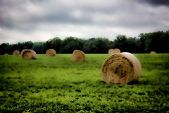 A roll in the Hay (13skies) Tags: food wow living soft day farmers eating country farming produce growing hay machines parison
