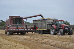 Case IH 2166 Axial Flow Combine Harvester unloading Spring Barley to a Easterby Trailers Grain Trailer drawn by a Case IH Puma 225 CVX Tractor (Shane Casey CK25) Tags: county ireland horse irish tractor field barley work flow golden spring hp corn power cut farm cork farming grain working harvest straw case international till crop combine cutting land crops farmer blade trailer puma agriculture drawn dust pulling contractor chaff collect blades trailers harvester collecting ih tilling 225 harvesting unloading axial cnh agri tillage cvx 2166 castletownroche easterby harvest2014