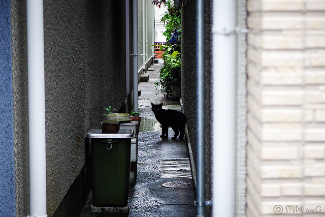 Today's Cat@2015-06-18