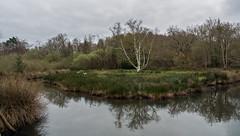 Fin d'hiver au Teich (JeanJoachim) Tags: smcpentaxda21mmf32allimited pentaxk10d réserveornithologiqueduteich parcnaturelrégionaldeslandesdegascogne