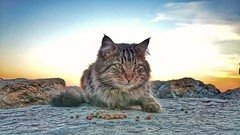 Kötü kedi Bahadır (ercanpolat) Tags: cat kedi cloud stone kaya animal sunrise sun flickr ngc
