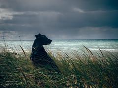 Storm's A'brewin' (Danielle Bednarczyk) Tags: travel dog lake storm black beach water up mi mix lab walk michigan overcast stormy roadtrip pit lakemichigan greatlakes adventure explore upper shore upperpeninsula peninsula