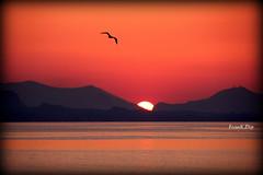 ... il tramonto sempre in forma (FranK.Dip) Tags: sunset sea montagne tramonto mare sole sicilia gabbiano monti brindisi orizzonte frankdip