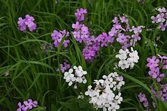 South Shore - Milwaukee (Kayakman) Tags: flowers lake flower color nature wisconsin lakemichigan milwaukee lakeshore southshore mke olt oakleaftrail miwlaukee canon40d