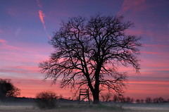 Abendrot - after sunset (milanicon2) Tags: sunset tree k silhouette 30 landscape pentax after paysage baum fa hochsitz gifhorn 2035mm isenbttel abenrot