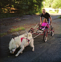 "Czar and Hudson Rocking The Sacco Cart • <a style=""font-size:0.8em;"" href=""http://www.flickr.com/photos/96196263@N07/14367667490/"" target=""_blank"">View on Flickr</a>"