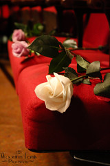 Grandmothers' Roses (Photos By Bill in WV) Tags: family wedding red rose groom bride chair velvet celebration