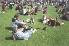 Untitled - Africa Oye, Liverpool (the underlord) Tags: film 35mm hound rangefinder jupiter12 dogdayafternoon nikons2 freefestival agfavistaplus200