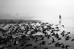 being followed (sparth) Tags: ocean city blackandwhite bw monochrome birds silhouette fog lumix blackwhite washington noiretblanc silhouettes nb panasonic wa washingtonstate brouillard sandpipers noirblanc 2014 zs40 panasoniclumixzs40 lumixzs40 birdsilflight