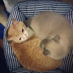 Onde cabe um cabem dois :D #chats #cats #gatos (Bibi) Tags: orange cats cozy chats laranja gatos sierra truffaut rousseau aconchegante iphoneography instagramapp uploaded:by=instagram