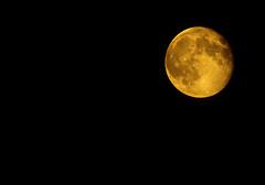 Moon @ 97% full 20140811 (Wils 888) Tags: moon big nj luna buwan 97full supermoon