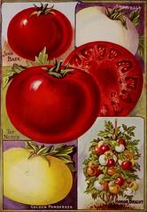 Anglų lietuvių žodynas. Žodis acidity reiškia n 1) rūgštumas; rūgštingumas; 2) aštrumas lietuviškai.