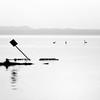 Les grèbes huppés gagnent du terrain (prenzlauerberg) Tags: bw lake bird nature landscape schweiz switzerland suisse lac dxo paysage oiseau neuchatel 2014 podicepscristatus lacdeneuchâtel podiceps grèbehuppé nikoncapturenx nikon70200mmf28 nikond610