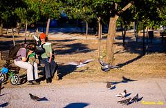 Pigeons with playfulness (@Katerina Log) Tags: park macro nature pigeons sony athens greece tamron playfulness   antonistritsispark sonyslta58  90mmf28macrossm katerinalog