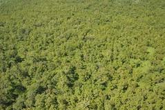 "vegetation Garamba national park • <a style=""font-size:0.8em;"" href=""http://www.flickr.com/photos/62781643@N08/14846862021/"" target=""_blank"">View on Flickr</a>"