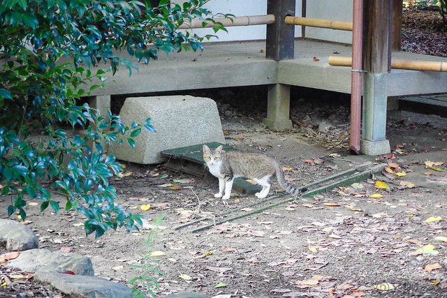 Today's Cat@2014-09-02