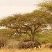 African safari, Aug 2014 - 004