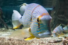 Oceanarium (Cissa Rego) Tags: sea fish nature animal aquarium nemo turtle octopus lobster oceanarium pulpo