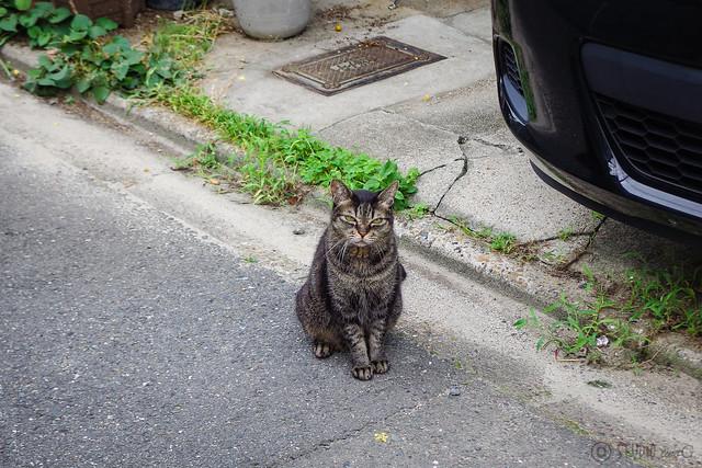 Today's Cat@2014-08-21