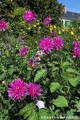 Le Jardin de Claude Monet, Giverny, France (Gaston Batistini Thks for 7.5 million views :) !) Tags: france fleurs jardin monet claude giverny fondation batistini gbatistini canon5dmkiii gastonbatistini