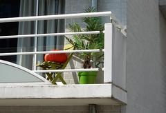 colorful seasonal transition time :) (verabellapiccolachiaragloria) Tags: pumpkin palmtree modernarchitecture seasonaltransition balconydecor