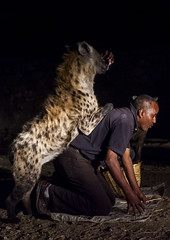 The Hyena Man Of Harar And Tourist Feed Raw Meat To Wild Hyenas, Harar, Ethiopia (Eric Lafforgue) Tags: africa people food male men animal vertical night danger mammal outdoors photography community day adult feeding african wildlife canine unescoworldheritagesite unesco tradition ethiopia cultures foodanddrink hyena adultsonly oneperson developingcountry courage hornofafrica ethiopian scavenging harrar eastafrica animalsinthewild harar carnivora animalbehaviour oneanimal traveldestinations famousplace spottedhyena alertness onlymen fulllenght oromo colorpicture onemanonly onematuremanonly animalthemes traveldestination colourimage africanethnicity 1people harer africanculture colourpicture hararjugol harergey ethio1409441
