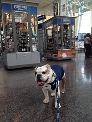 """Stopped by @CollectorsDen1 kiosk at @INDairport. Didn't see any @ButlerAthletics stuff. Probably sells out quickly! • <a style=""""font-size:0.8em;"""" href=""""http://www.flickr.com/photos/73758397@N07/15082229440/"""" target=""""_blank"""">View on Flickr</a>"""