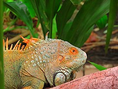 iguana (Teno_) Tags: chile santiago canon selva parquearaucano santaigodechile ciudaddesantiago sx50hs canonsx50hs