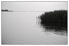 Gouwzee (Schapekop) Tags: bw nederland zw monnickendam hemmeland gouwzee