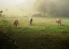 Horses (podolux) Tags: rural md farm maryland iphone 2014 postprocessing ruralmaryland washingtoncounty glenrosa washingtoncountymd glenrosafarm camerabagformac snapseed iphone5s ios8 september2014