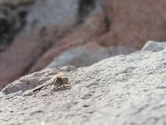 macro (Simon Neutert) Tags: simon insect universität mainz unimainz botanischergarten neutert simonneutert