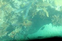 30. John Pennekamp coral reef (Misty Garrick) Tags: johnpennekamp johnpennekampreef johnpennekampcoralreefstatepark coralreef florida keylargofl keylargo floridakeys atlanticocean