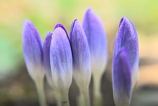 spring ensemble
