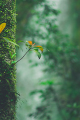 P3113884 (巍譯) Tags: green tree 葉