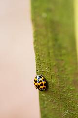 Ladybug (emeksv) Tags: animals bestof bugs sell