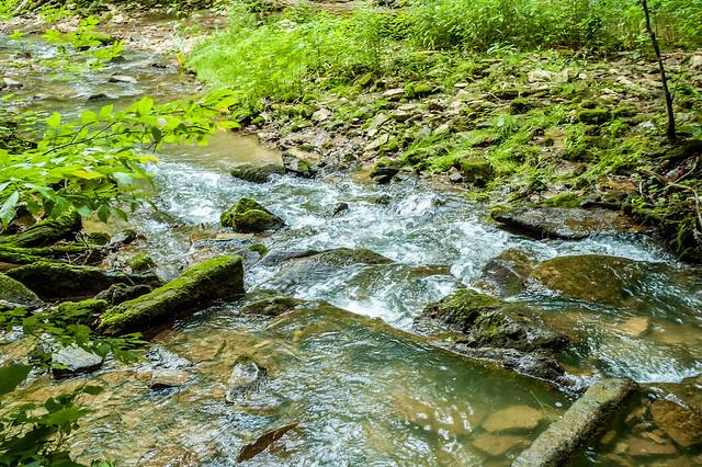 Donaldson's Cave Nature Preserve - Spring Mill State Park - June 8, Donaldson's Woods - Spring Mill State Park - June 8, 2014