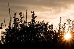 Abend an der Wildblumenwiese #3