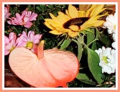 Con aspecto tropical.. (margabel2010) Tags: flores hojas flora rosa amarillo ramos girasoles